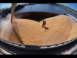 Эмбарго на экспорт зерна: производители России просят квот