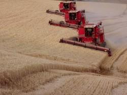 Россия возвращается на мировой рынок зерна