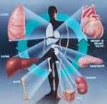 Коммерческая трансплантология