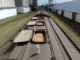 Российская пшеница - быть или не быть?
