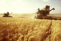 Сельское хозяйство Украины  - carbofood.ru